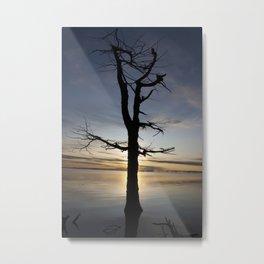 Shadow tree at dawn - Khövsgöl Mongolia Metal Print