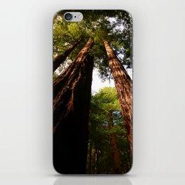 Redwood Tree Tops iPhone Skin