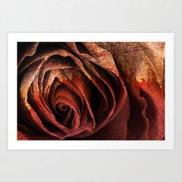 Bleeding Rust Rose Art Print