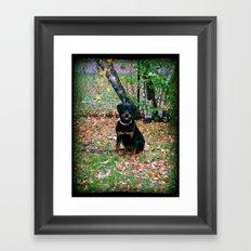 Puppy Framed Art Print