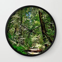 Muir Woods Study 22 Wall Clock