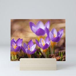 Concept flora : Wild crocus Mini Art Print