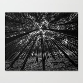 Oblivion Forest      (BW) Canvas Print