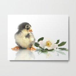 pretty chicken chick with flower Metal Print