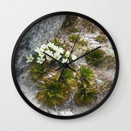 Gentiana bellidifolia Wall Clock
