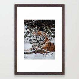 Blissful Tiger Framed Art Print