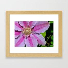 Pink Clematis by Teresa Thompson Framed Art Print