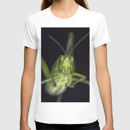 Curious Katydid T-shirt
