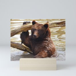 Majestic Large Grown Grizzly Bear Clinging Onto Fleetwood In Lake Ultra HD Mini Art Print