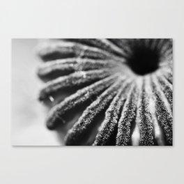 Unpopped Poppy Canvas Print