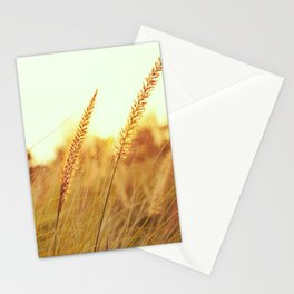 Sunlit Fountain Grass Photograph Stationery Cards