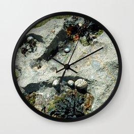 The Seashore Collective Wall Clock