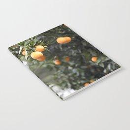 Ojai Oranges Notebook