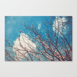 Spring Trees Buds Sunny Day Blue Sky Canvas Print
