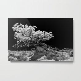 Infrared Torrey Pine Metal Print