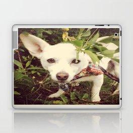 Looking Lobo Laptop & iPad Skin