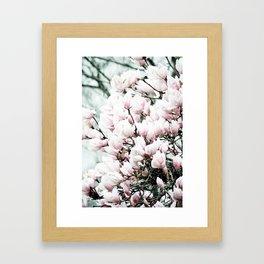 Japenese Dogwood Blooming Framed Art Print