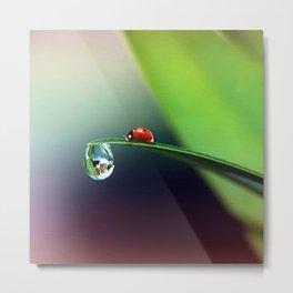 Ladybug on Wet Leaf Whimsical Nature Metal Print