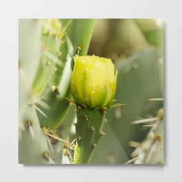 Englemann's Prickly Pear Metal Print
