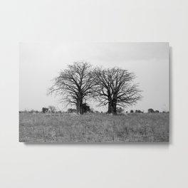 Two baobab trees Metal Print
