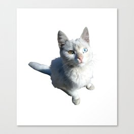 Cat with different eyes Canvas Print