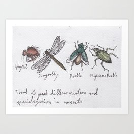 Trend of Great Differentiation and Specialization Between Insects Art Print