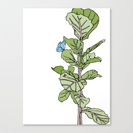 Lined Fig Tree and Blue Butterfly Canvas Print