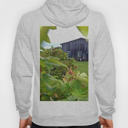 Wild Rose Bush and the Old Barn Hoody
