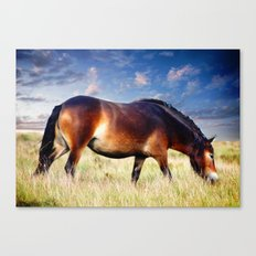 exmoor pony Canvas Print