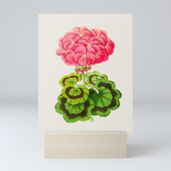 Vintage Botanical Illustration Beautiful Pink Flower Lush Green Leaves Scientific Floral Drawing by enshape