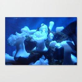 Scripps Blue Canvas Print