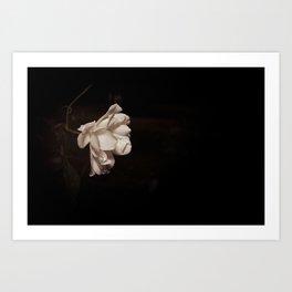 Minimal Rose at Night Art Print