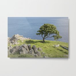 Rock and Tree, Murlough Beach; County Antrim; Northern Ireland Metal Print