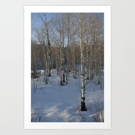 Colorado Tress Art Print