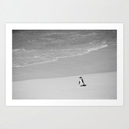 Lone African Penguin walking on beach Art Print
