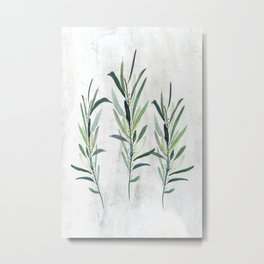 Eucalyptus Branches Metal Print
