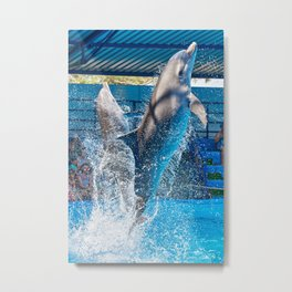 Dolphins jumping out of water on circus show Metal Print