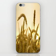 Golden Wheat Meadow iPhone & iPod Skin