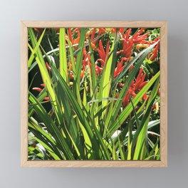 Firecracker Red Flowers Nestled In Lavish Leaves Framed Mini Art Print