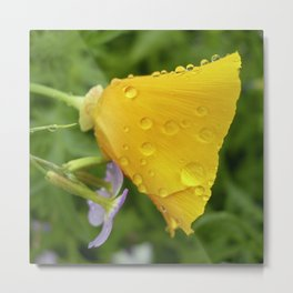 california poppy IV Metal Print