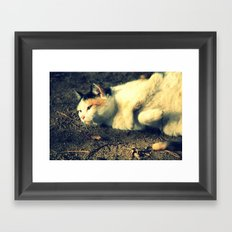 Tabby Framed Art Print