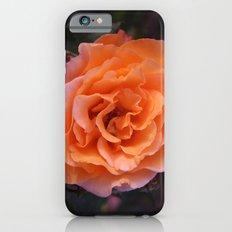 Holland Park Rose iPhone 6s Slim Case