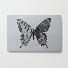 Butterfly Two Sexes II Metal Print