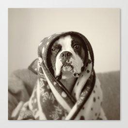 Obi Wan (Buck the world's most lovable boxer dog) Canvas Print