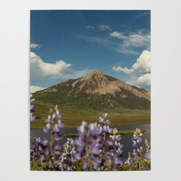 Mount Crested Butte through the Lupines  Poster