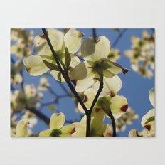 Dogwood Days of Spring Canvas Print