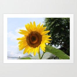 une seule fleur Art Print