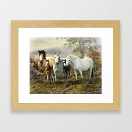 Connemara Ponies Framed Art Print