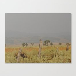 Bird perched after the rain at sunset Canvas Print