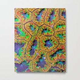Electric Blastomussa Wellsi (blast coral) Metal Print